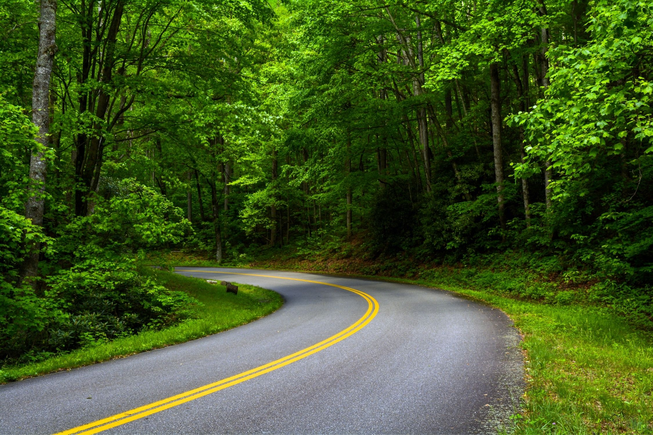 The Blue Ridge Parkway moving through forest