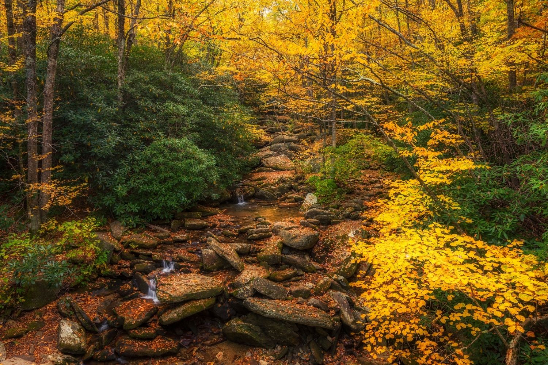 Grandfather-Trail best hikes in north carolina