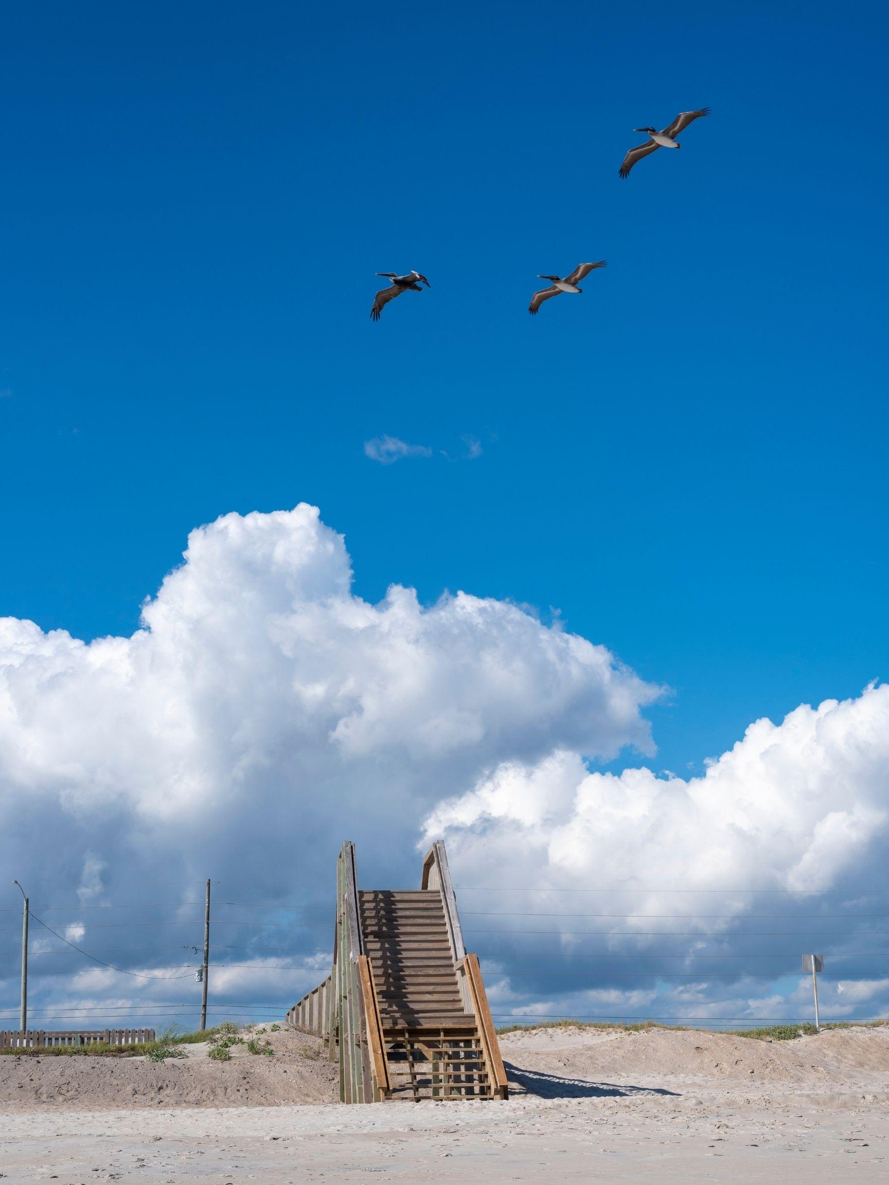 Pelicans Over Topsail Beach