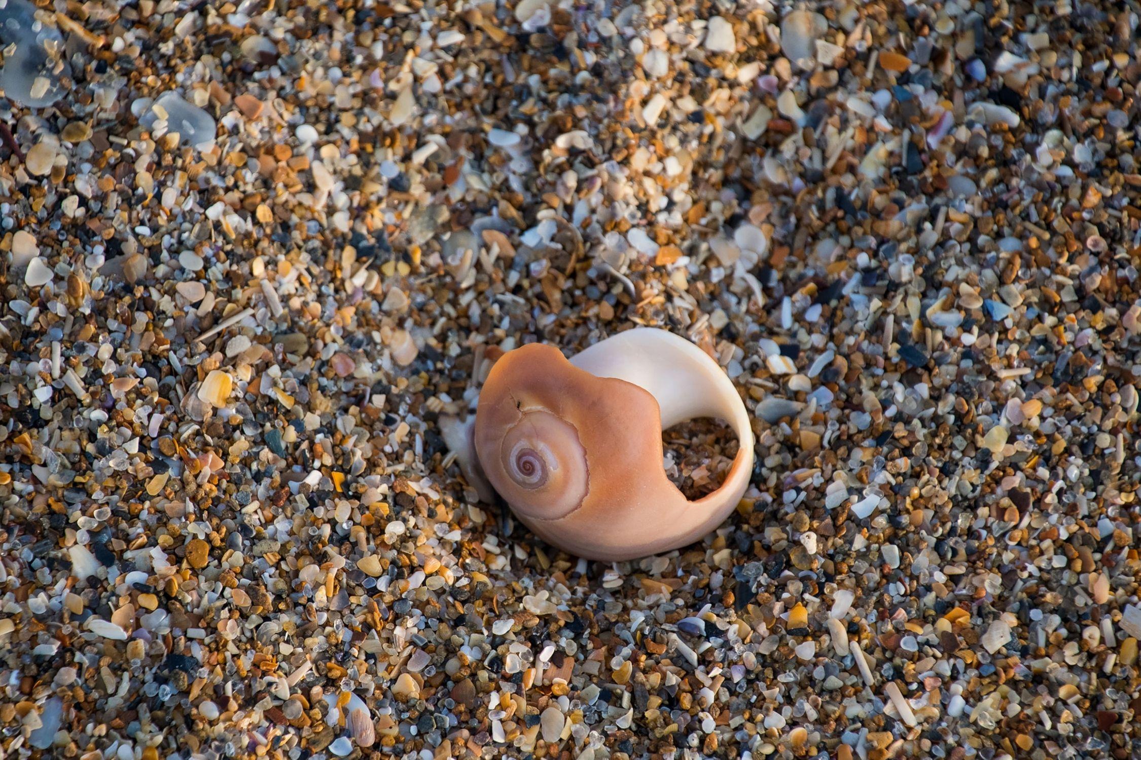 Seashell on Topsail Island