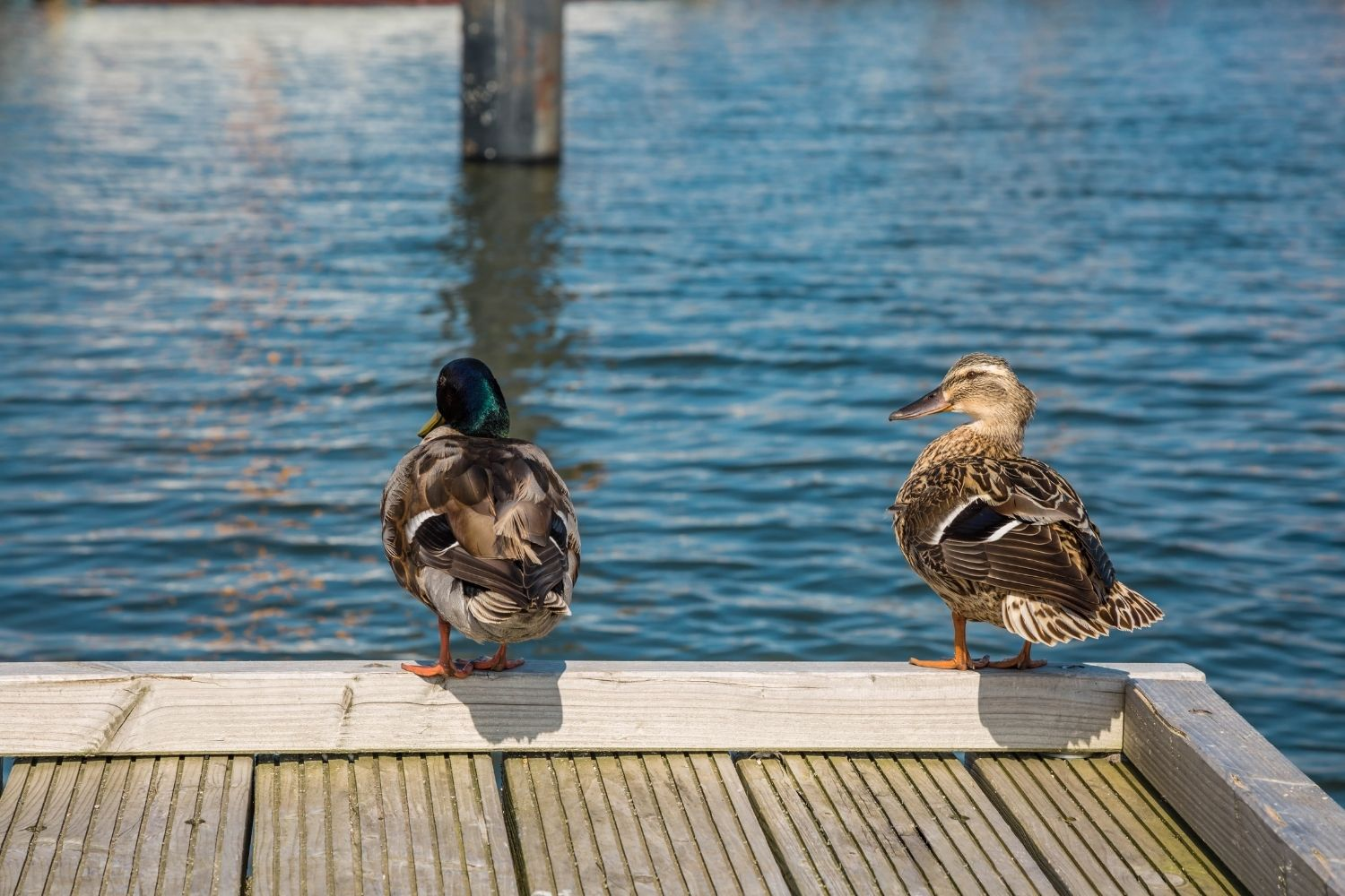 best outer banks town - duck